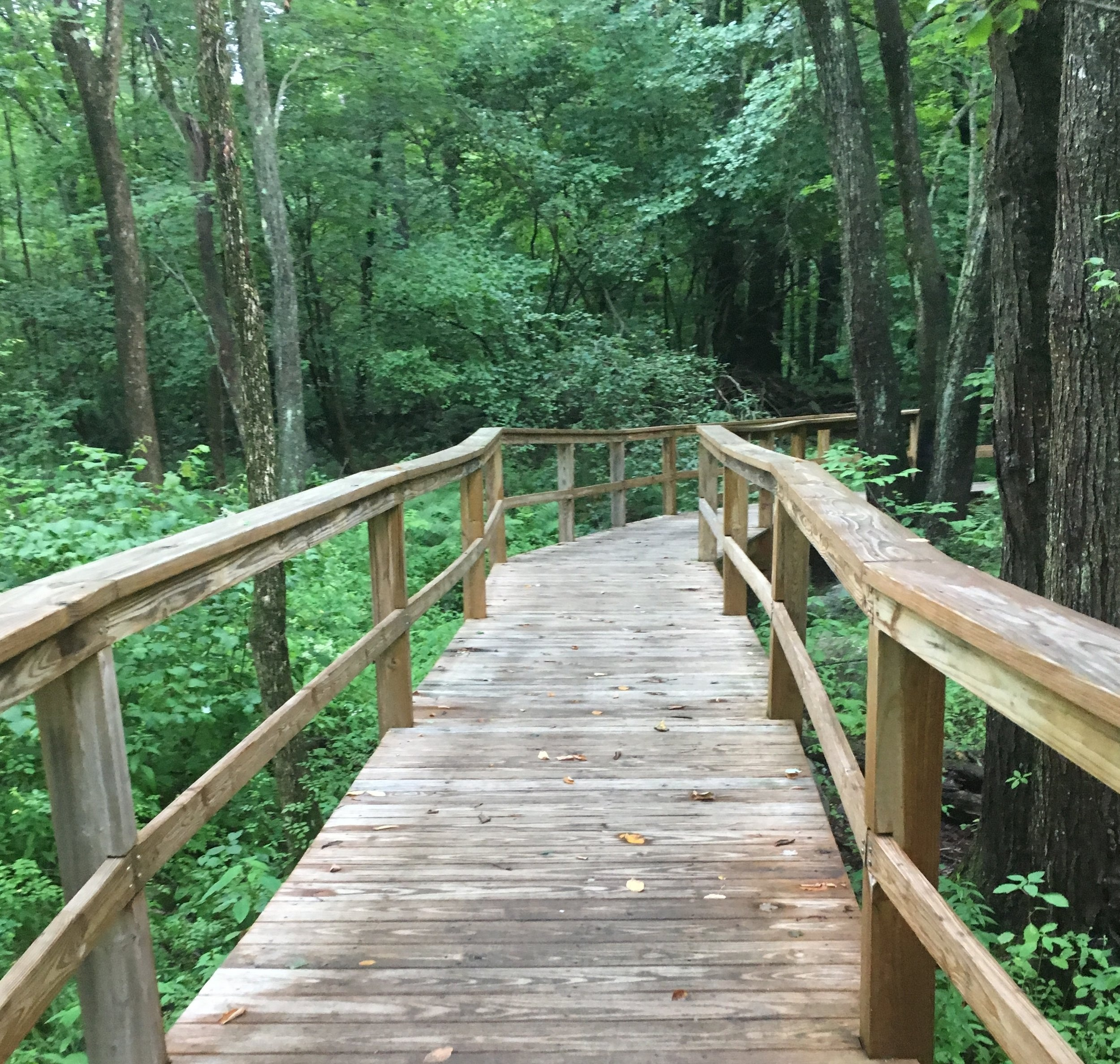 Bridges along the Wildflower Loop Trail at the Acton Arboretum wander through woods of varying shades of green with assorted bark in taupes, browns, and grays,