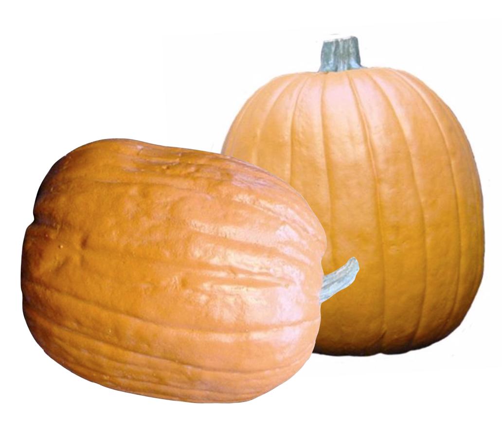 """Faux 11""""to 13"""" pumpkins"""