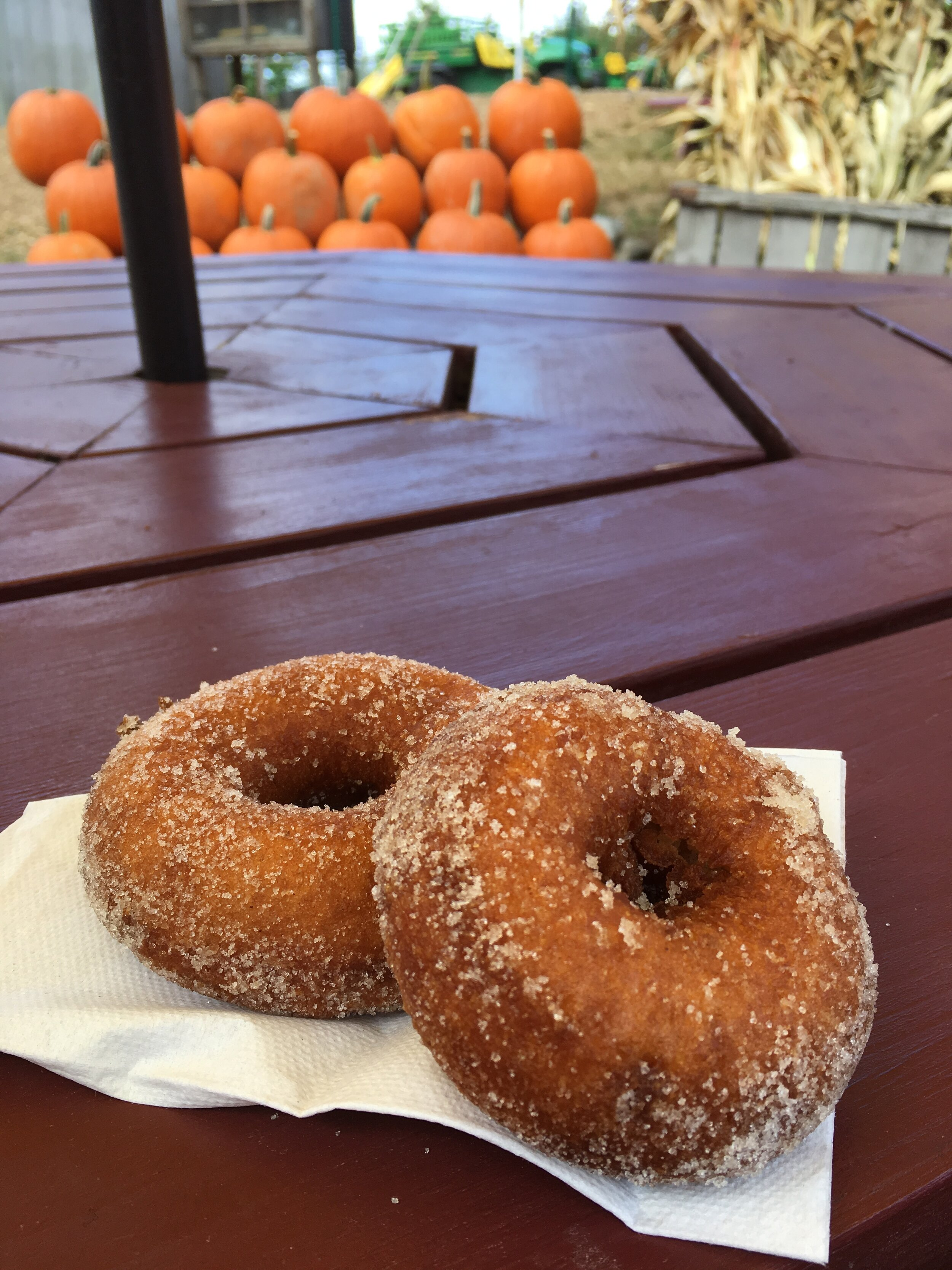 Enjoying Cider donuts at Shelburne Farm in Stow, MA
