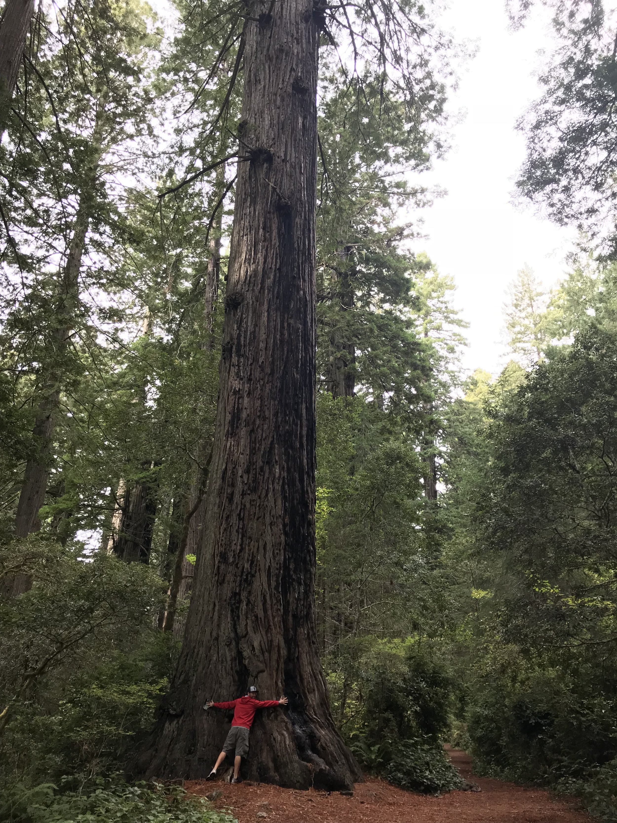 Hike Four:  Lady Bird Johnson Grove  in Redwood NP. Give a tree a BIG HUG when you are there!