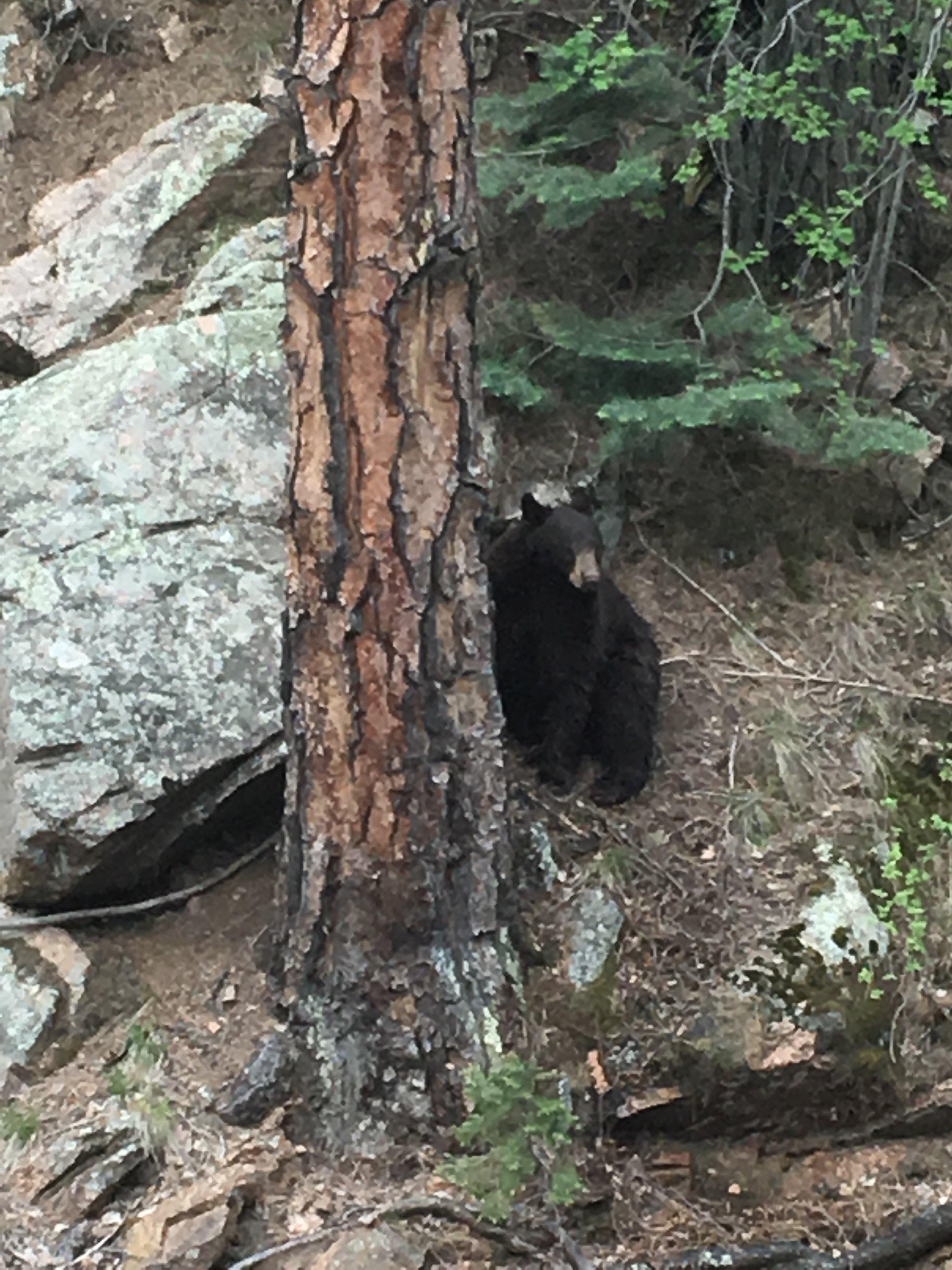 Momma Bear at Seven Falls!
