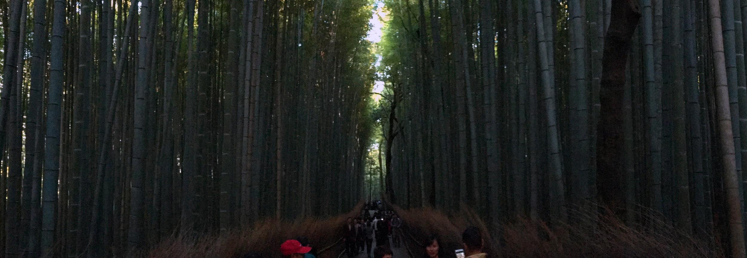 Arashiyama Bamboo Grove - Kyoto.jpg