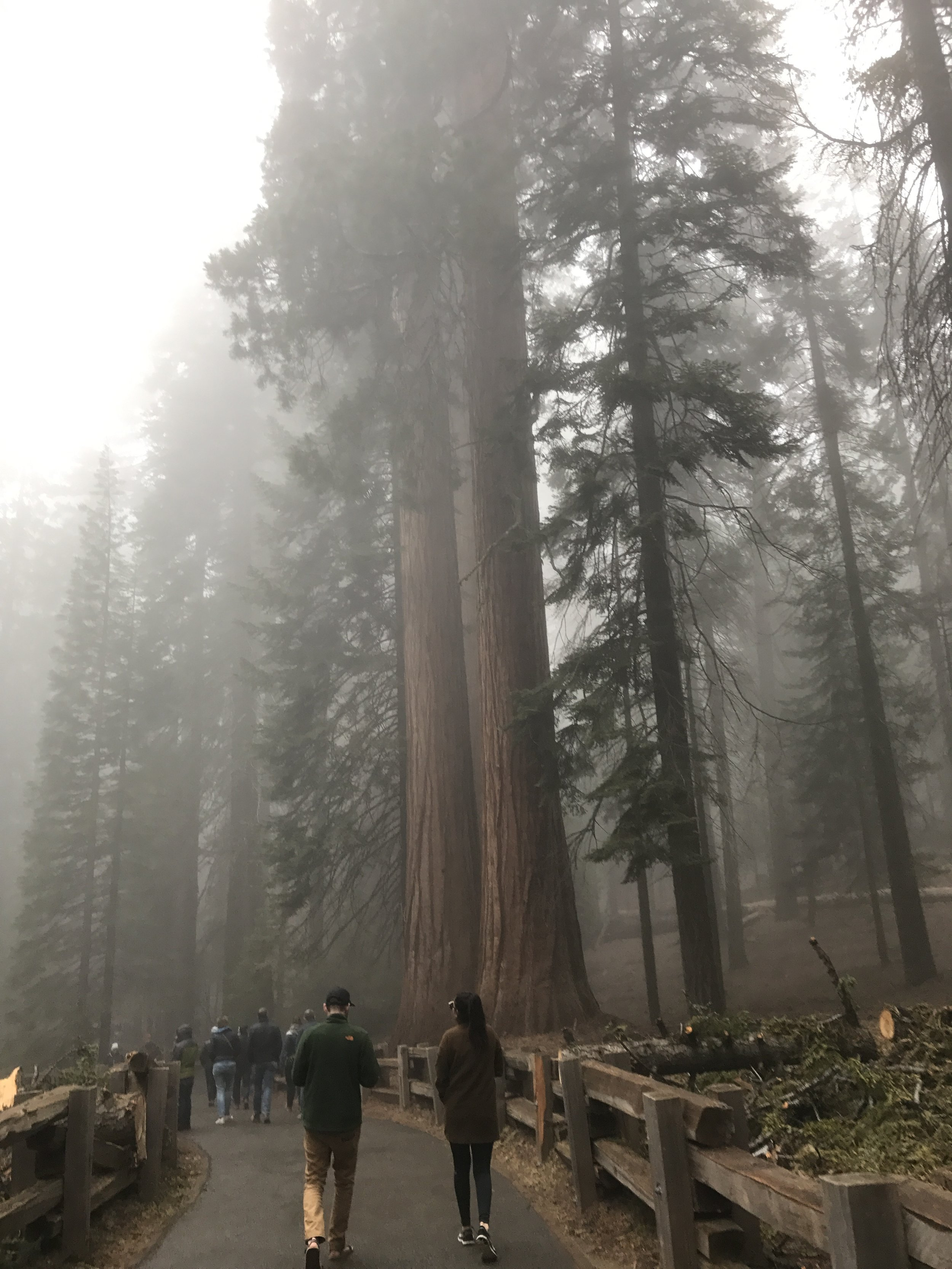 Don't just stop at General Sherman though, the Giant Forest has trails for miles and you can weave in and out of these massive trees. If you visit sister park Kings Canyon National Park you can visit similar (but less crowded groves!)