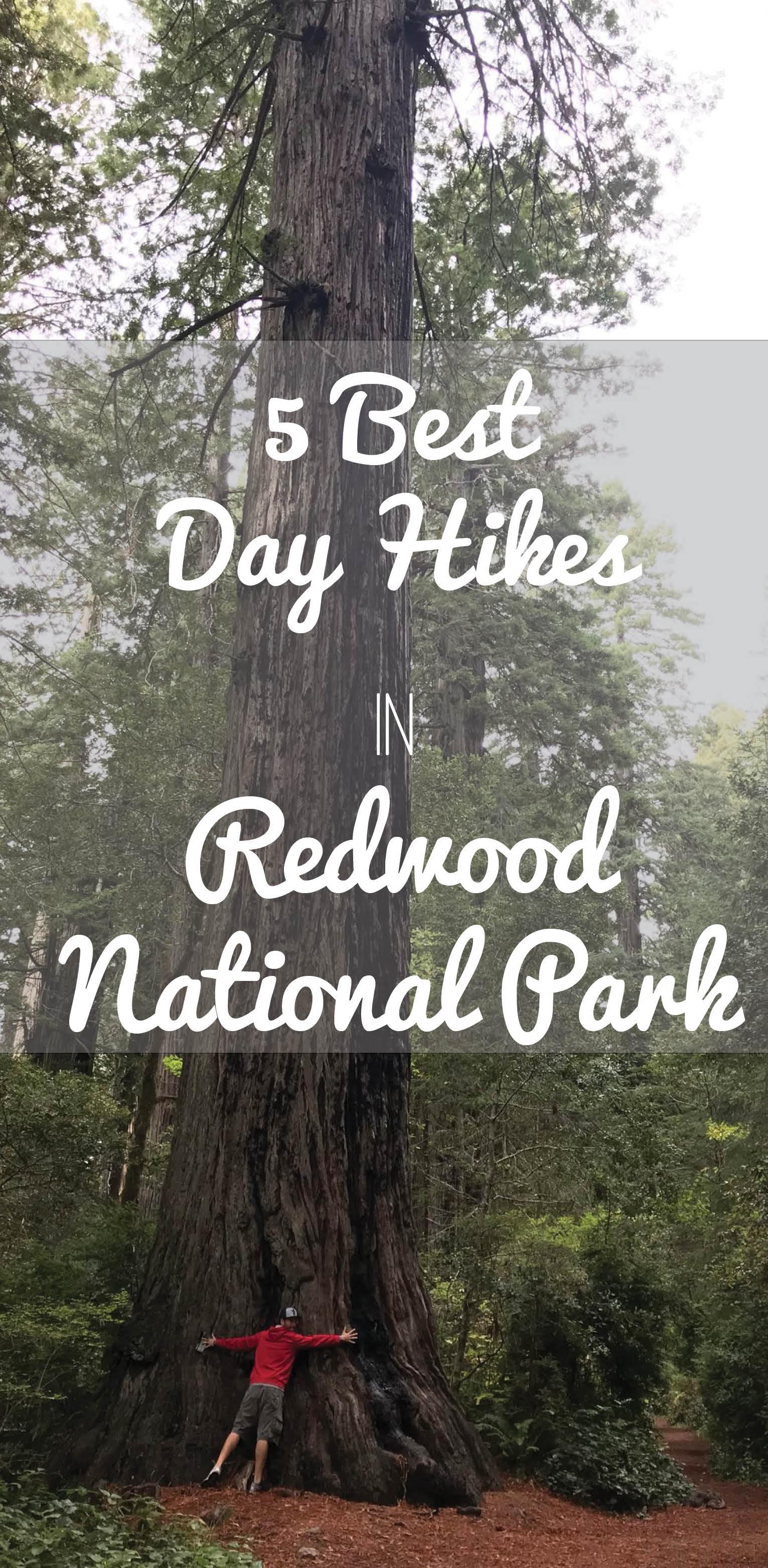 Best Day Hikes in Redwood.jpg