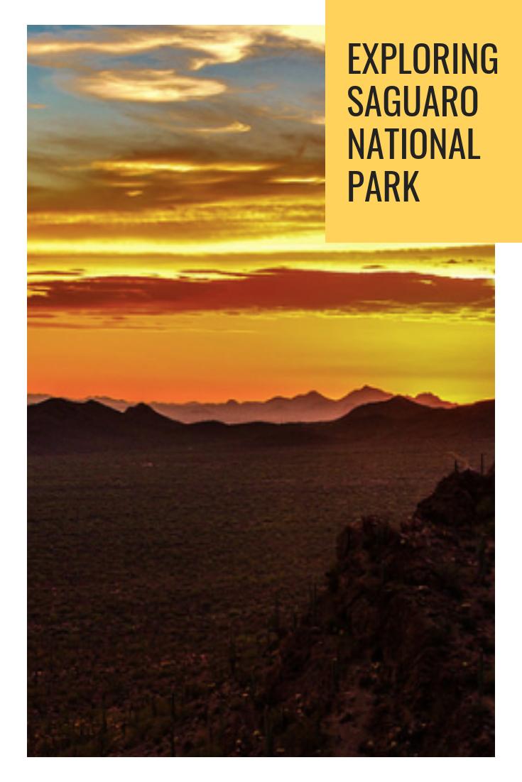 Exploring Saguaro national park.png