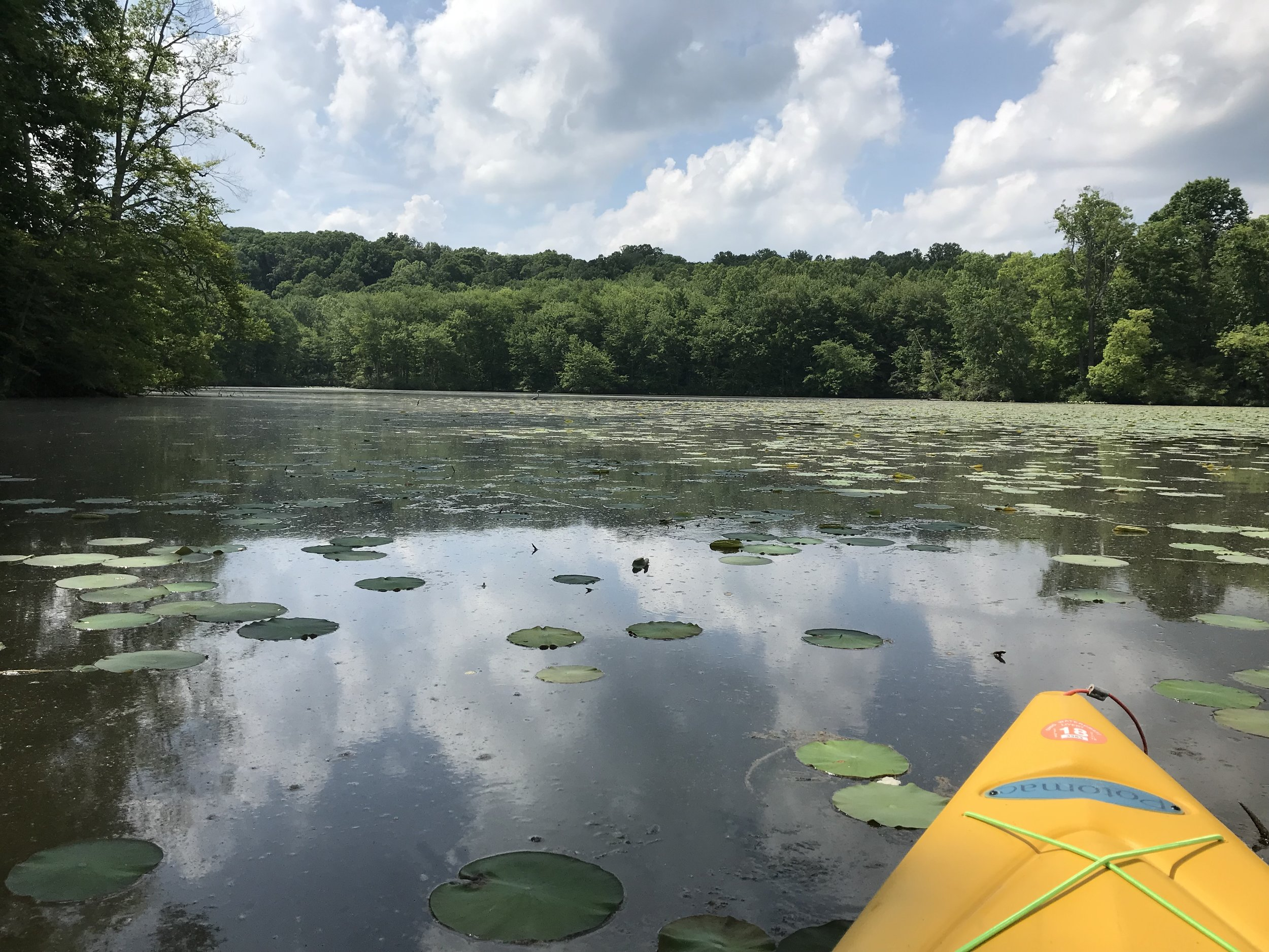 The  Lake Logan Marina  is a great place to rent a kayak and take a paddle out on Lake Logan, especially into areas like this one where the pontoon boats can't go!