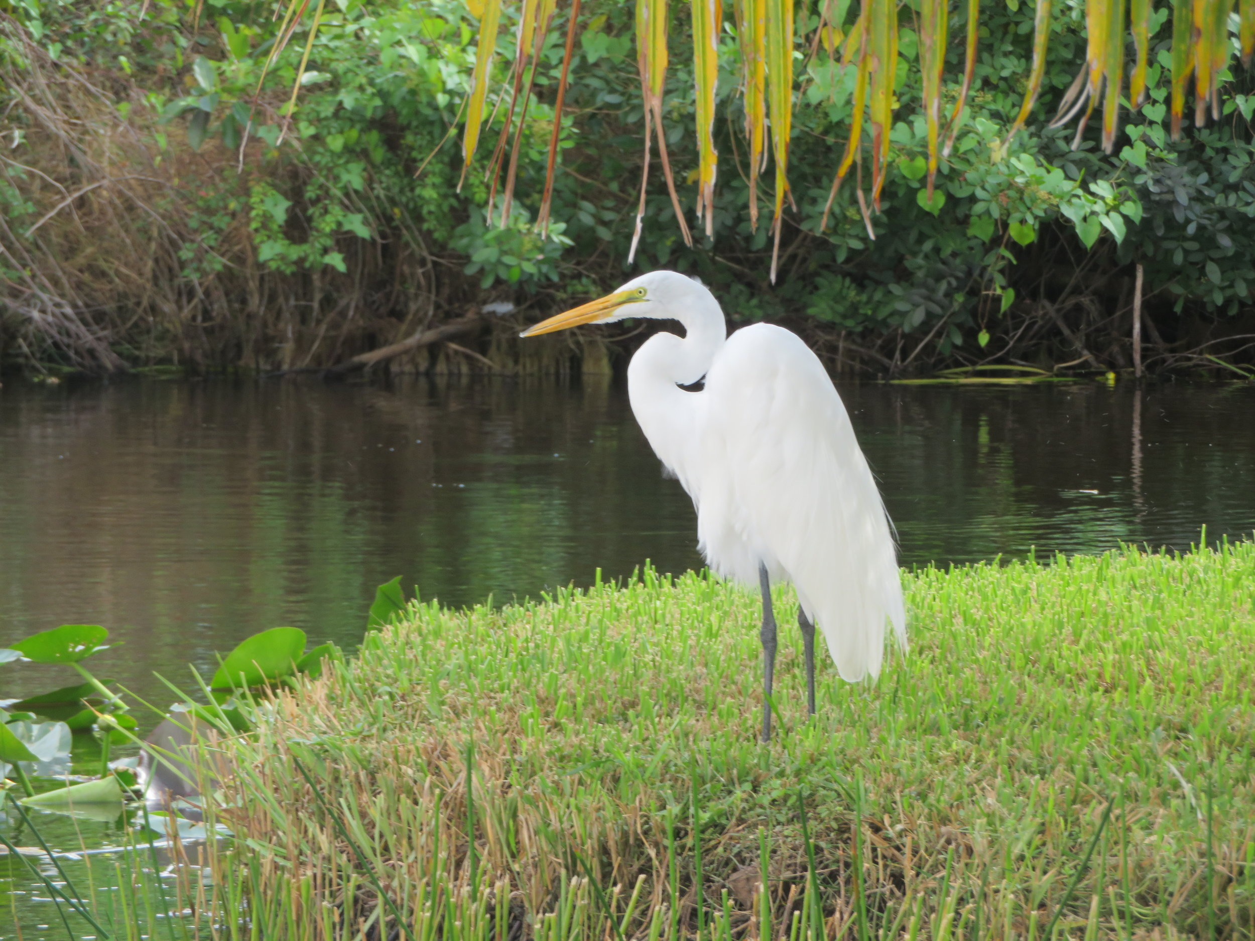 The birds of the Everglades will not disappoint.