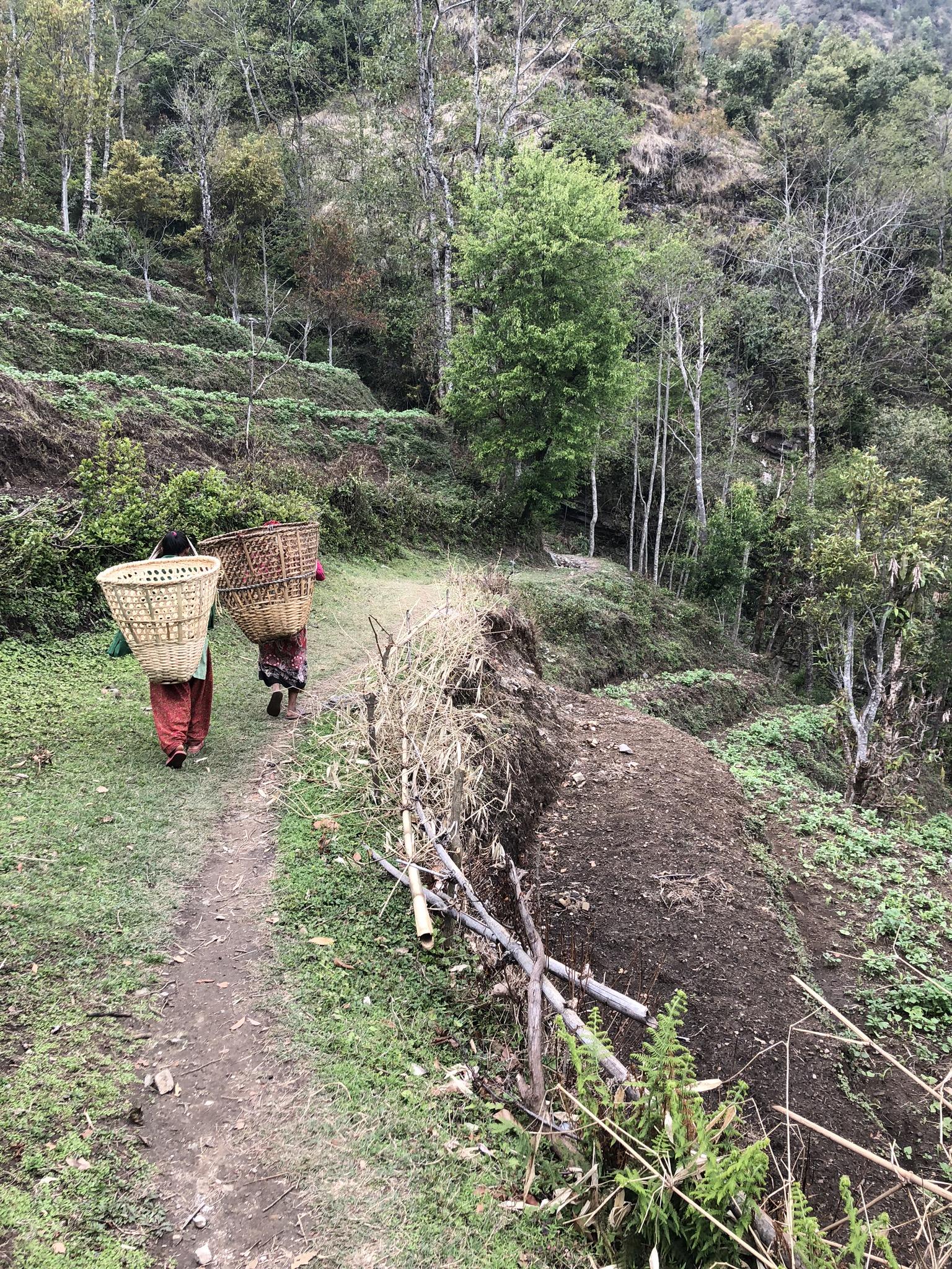 Helambu Trail1.jpg