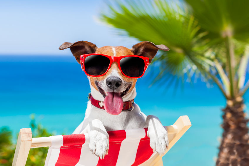 dog with sunglasses at beach image.jpg