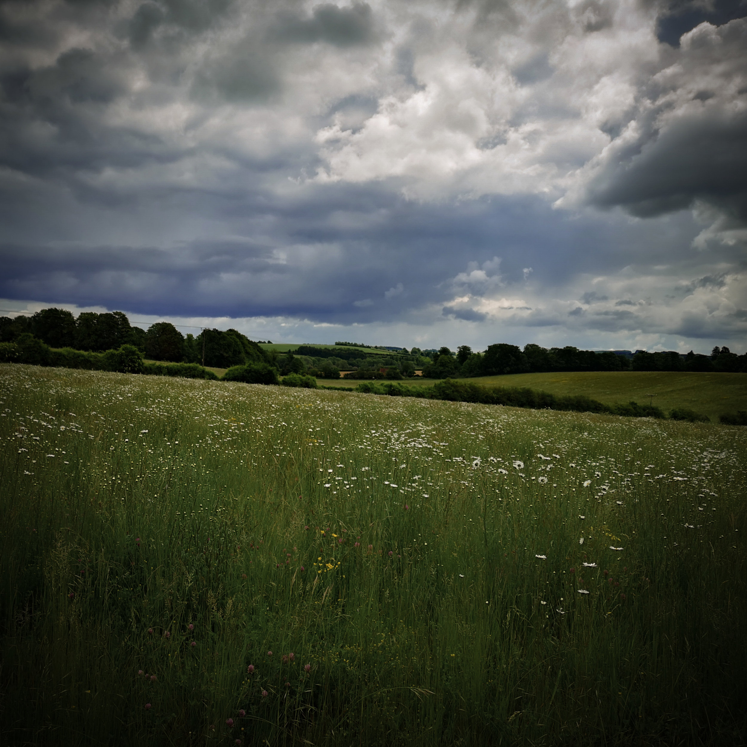 Barton Meadows, Winchester on a cloudy day by Hampshire Photographer Evie Winter
