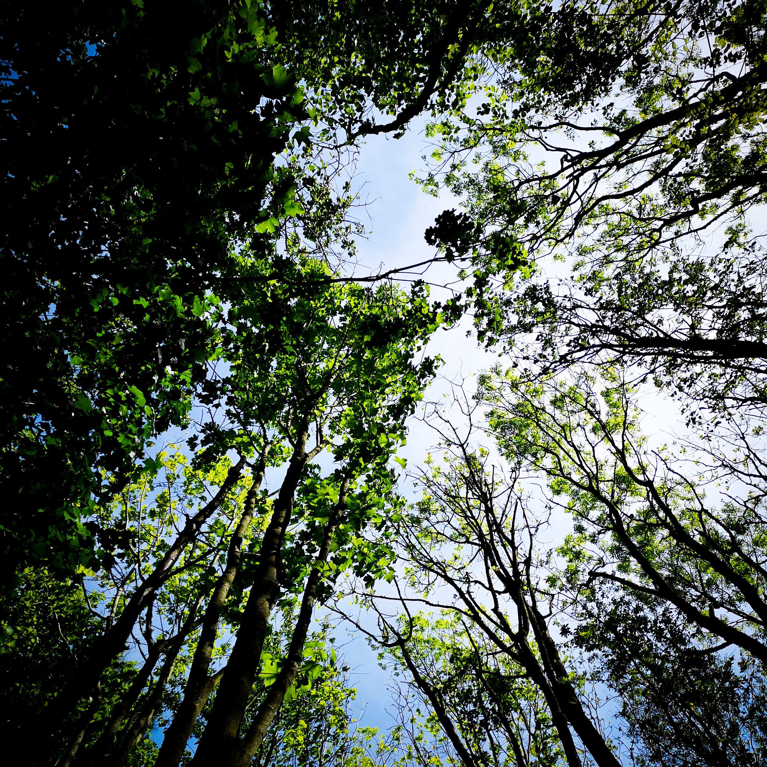 Trees and Sky in Abbots Barton Winchester by Hampshire Photographer Evie Winter