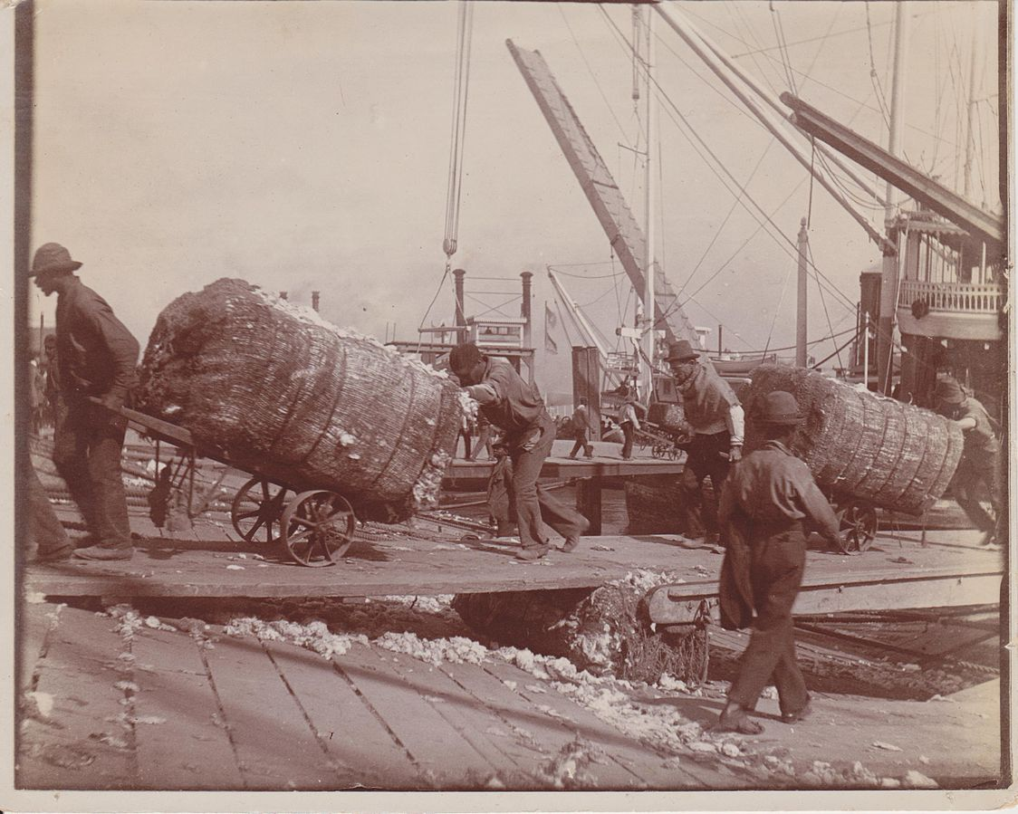 Black roustabouts unloading cotton from steamboat, 1900.
