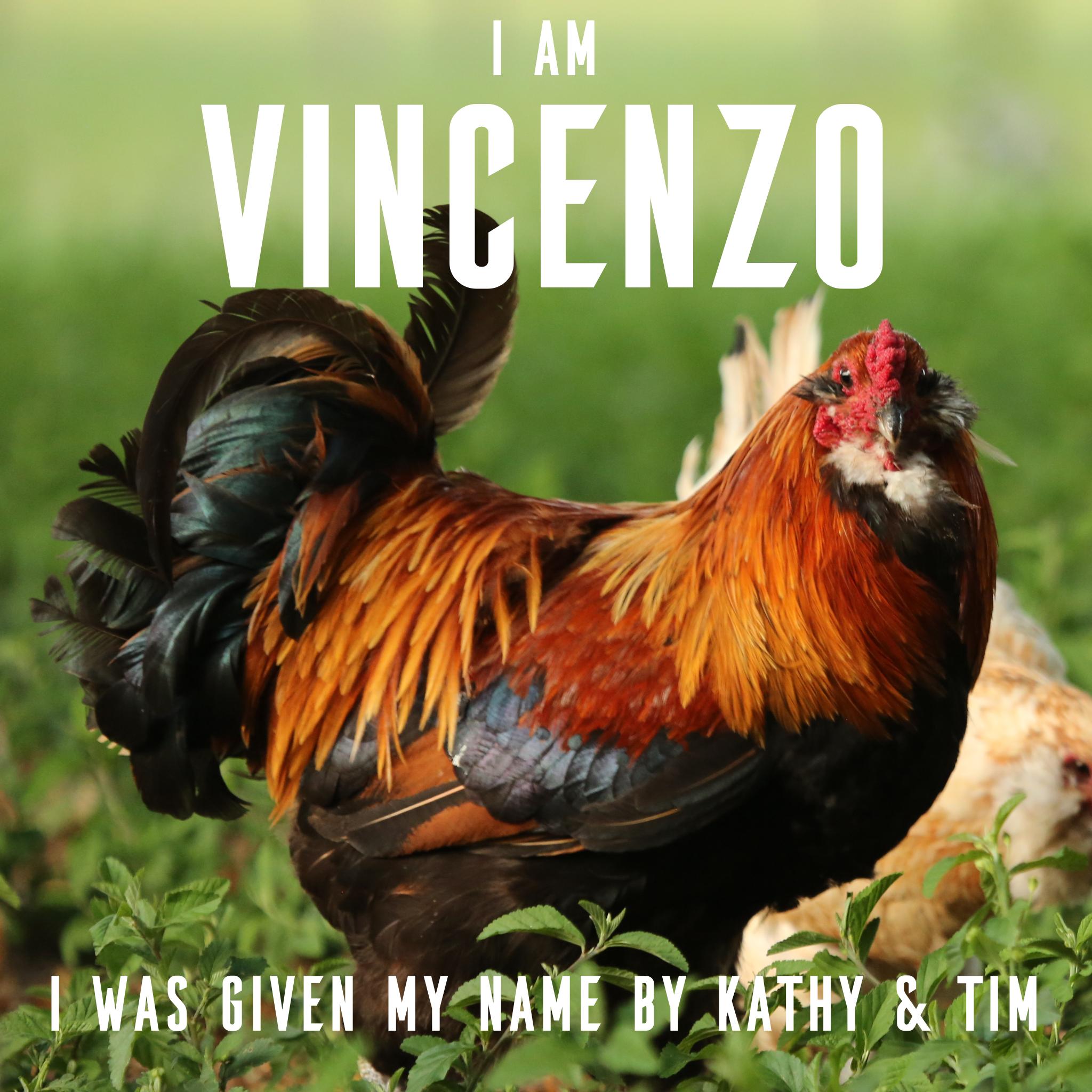 Vincenzo 4.jpg