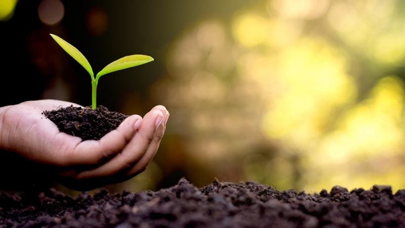 Dar En-linea - Con cada donación sembramos en el Reino de Dios Marcos 4:26-34