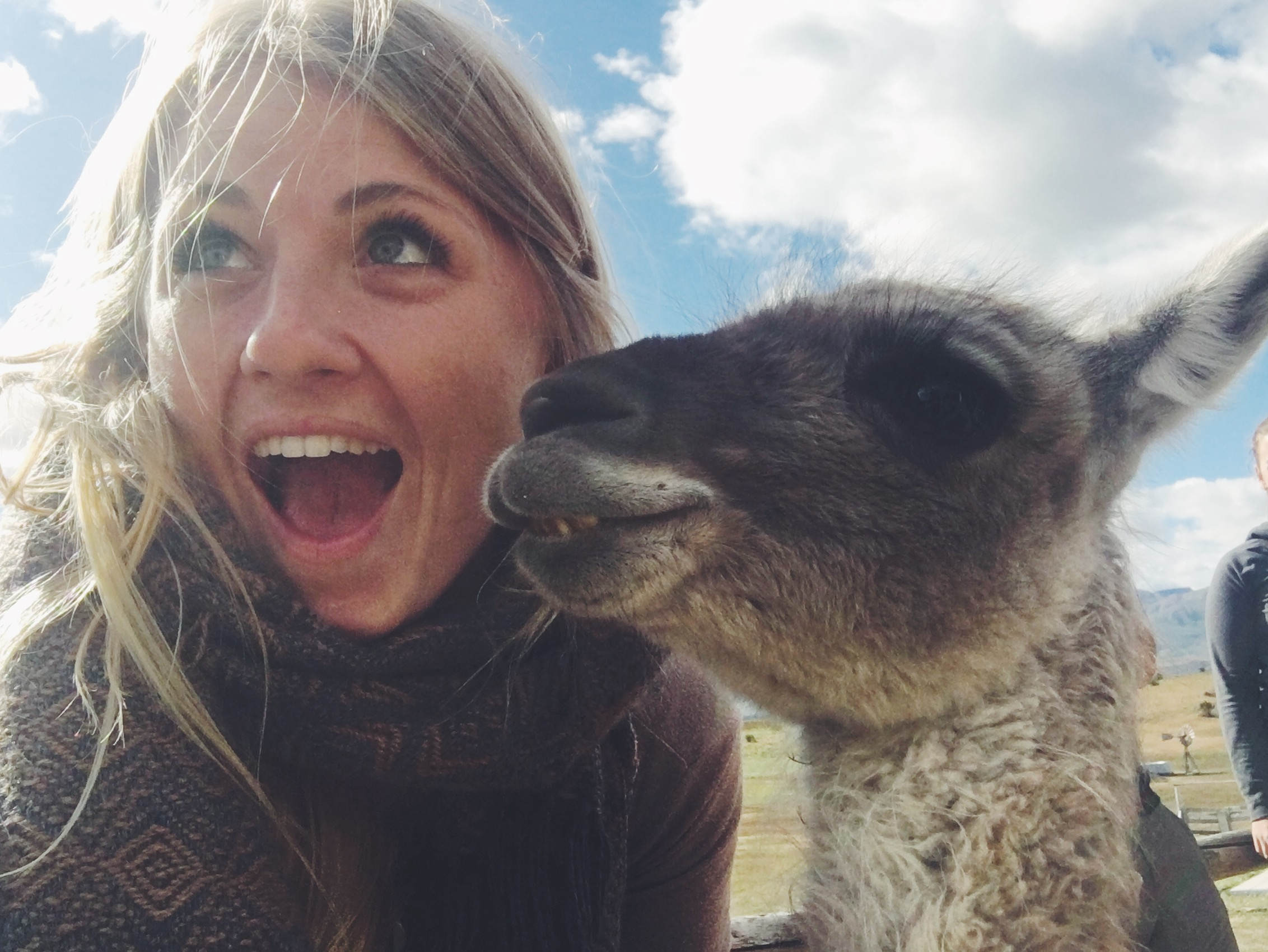 Making furry friends with llamas in Peru