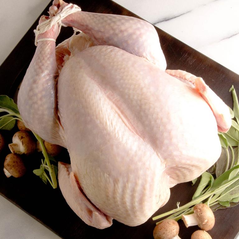 fresh_turkey_1024x1024.png