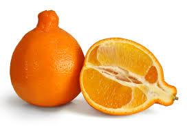 organic minneola mandarins $1.99/lb -