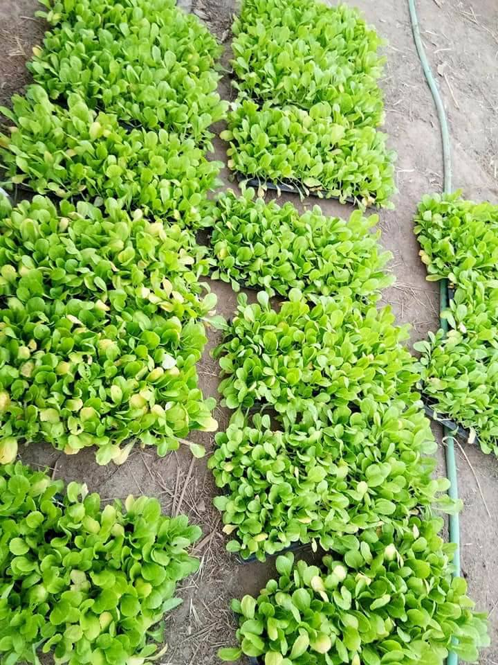LHome seedlings.jpg