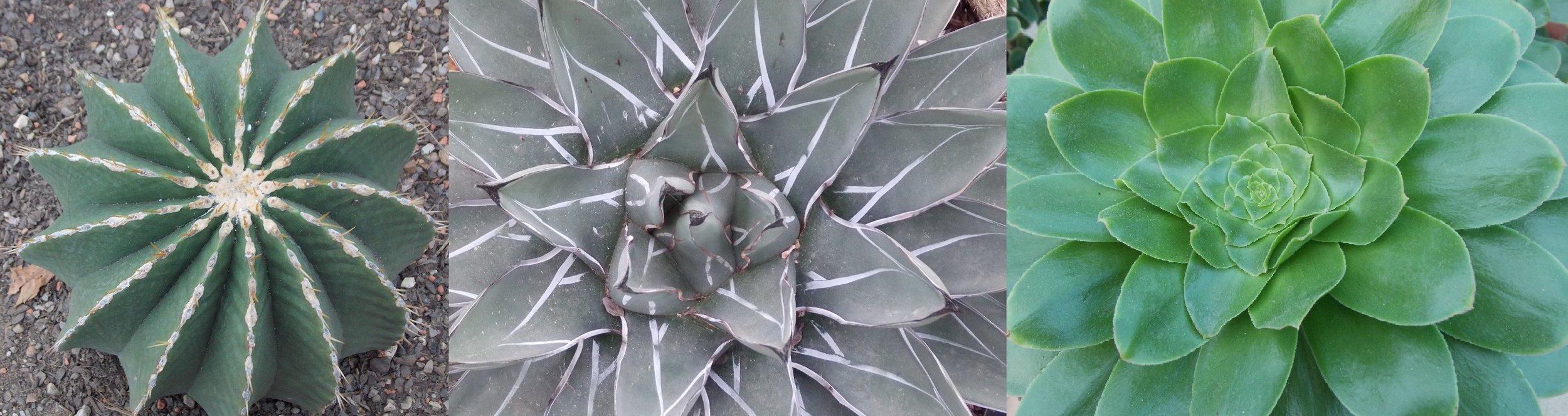 Fibonacci spirals spotted at Kew Gardens