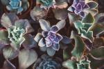 Succulent6.jpg