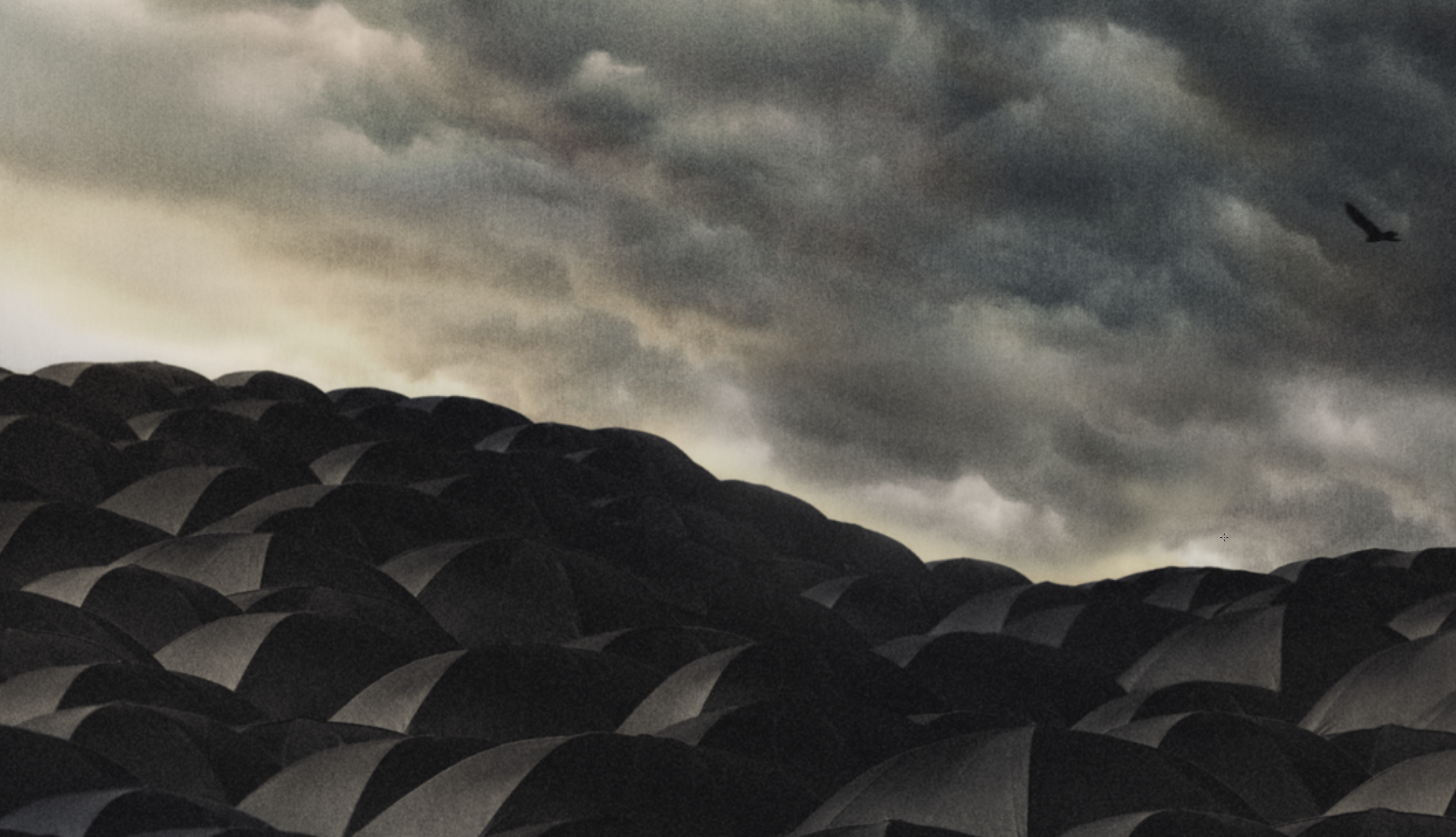 Detail-Crop-Umbrellas.png