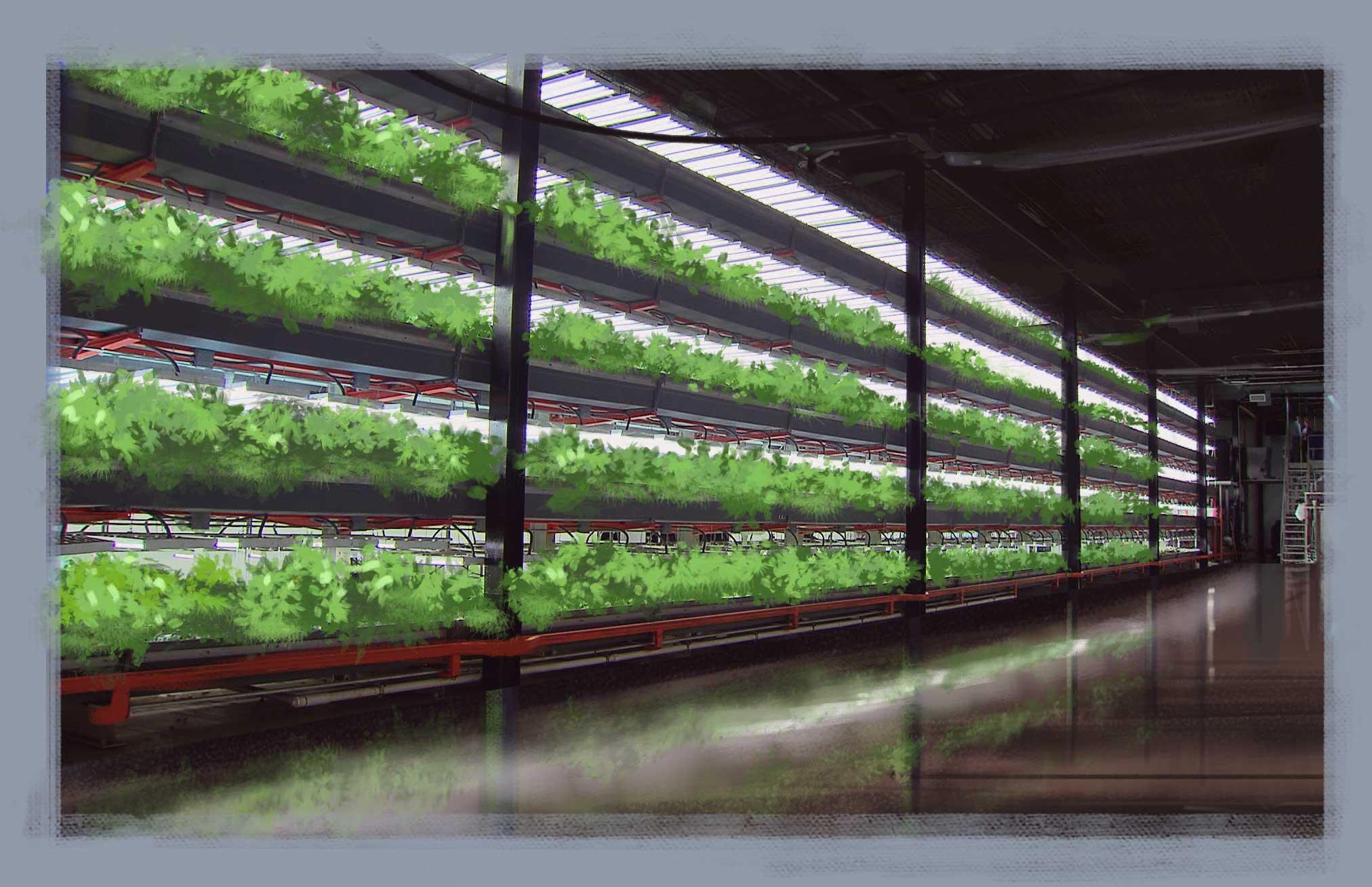High yield Aero gardens
