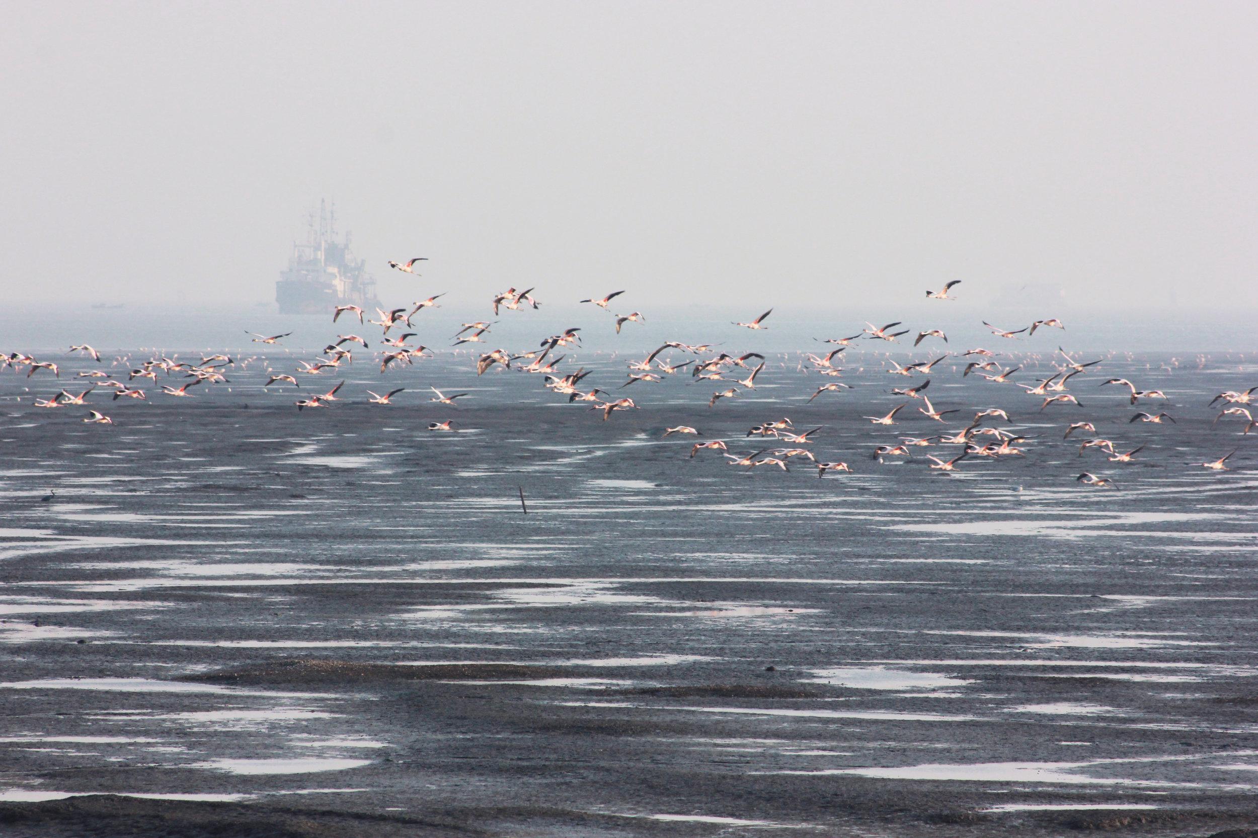 flamingos3.jpg