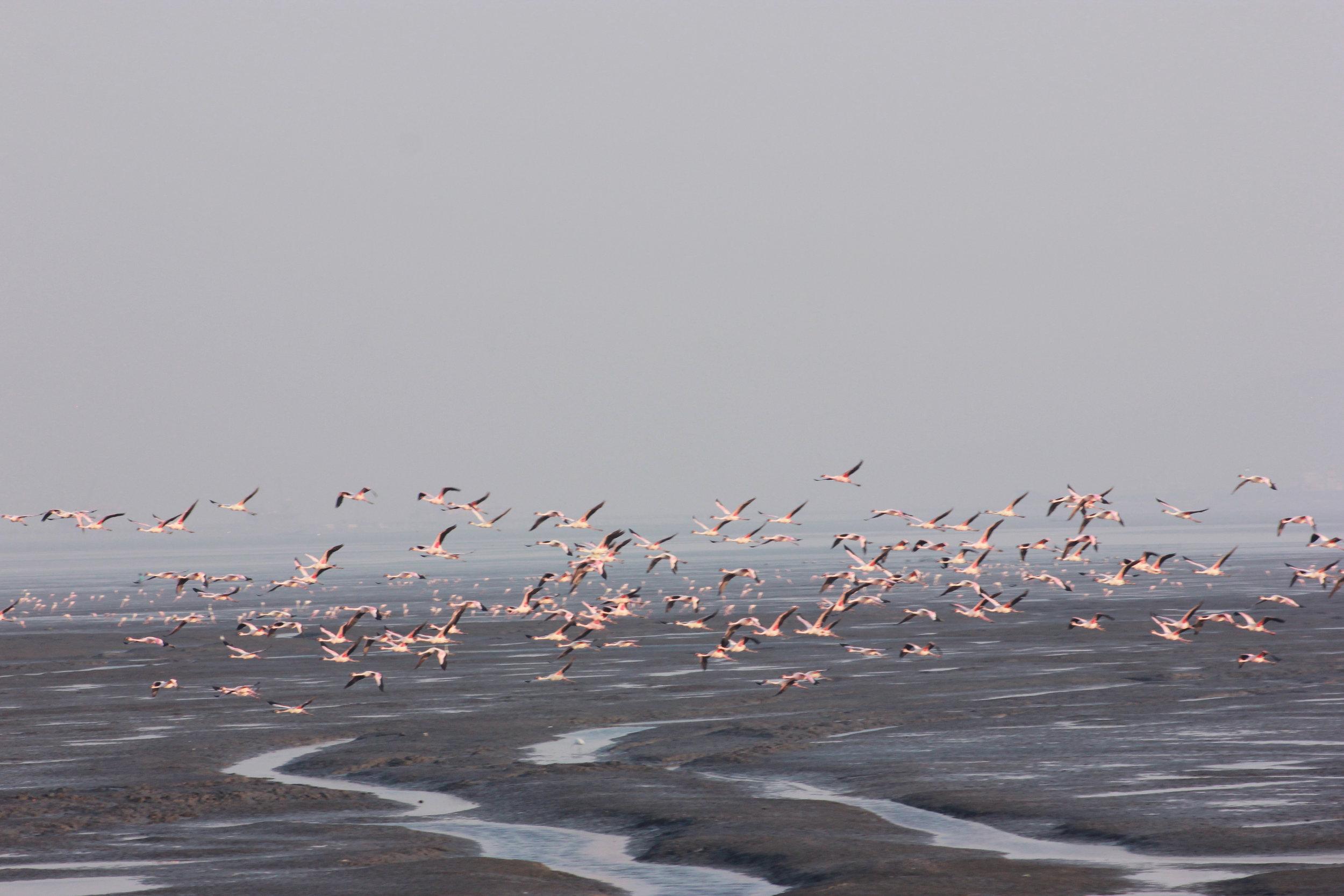 flamingos4.jpg