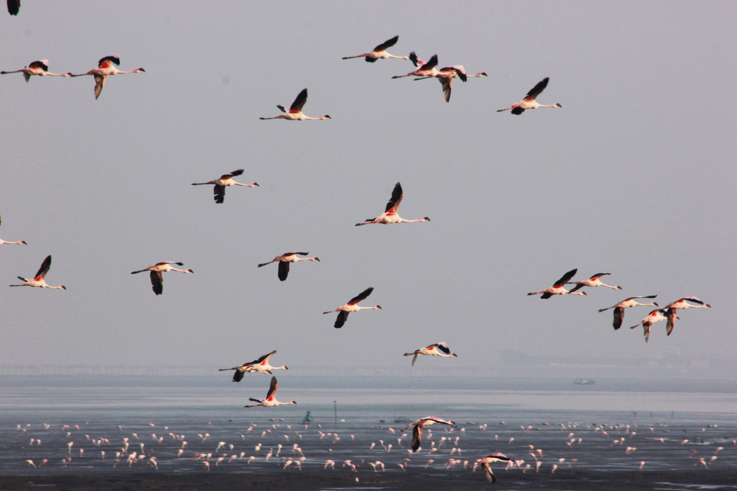 flamingos5.jpg