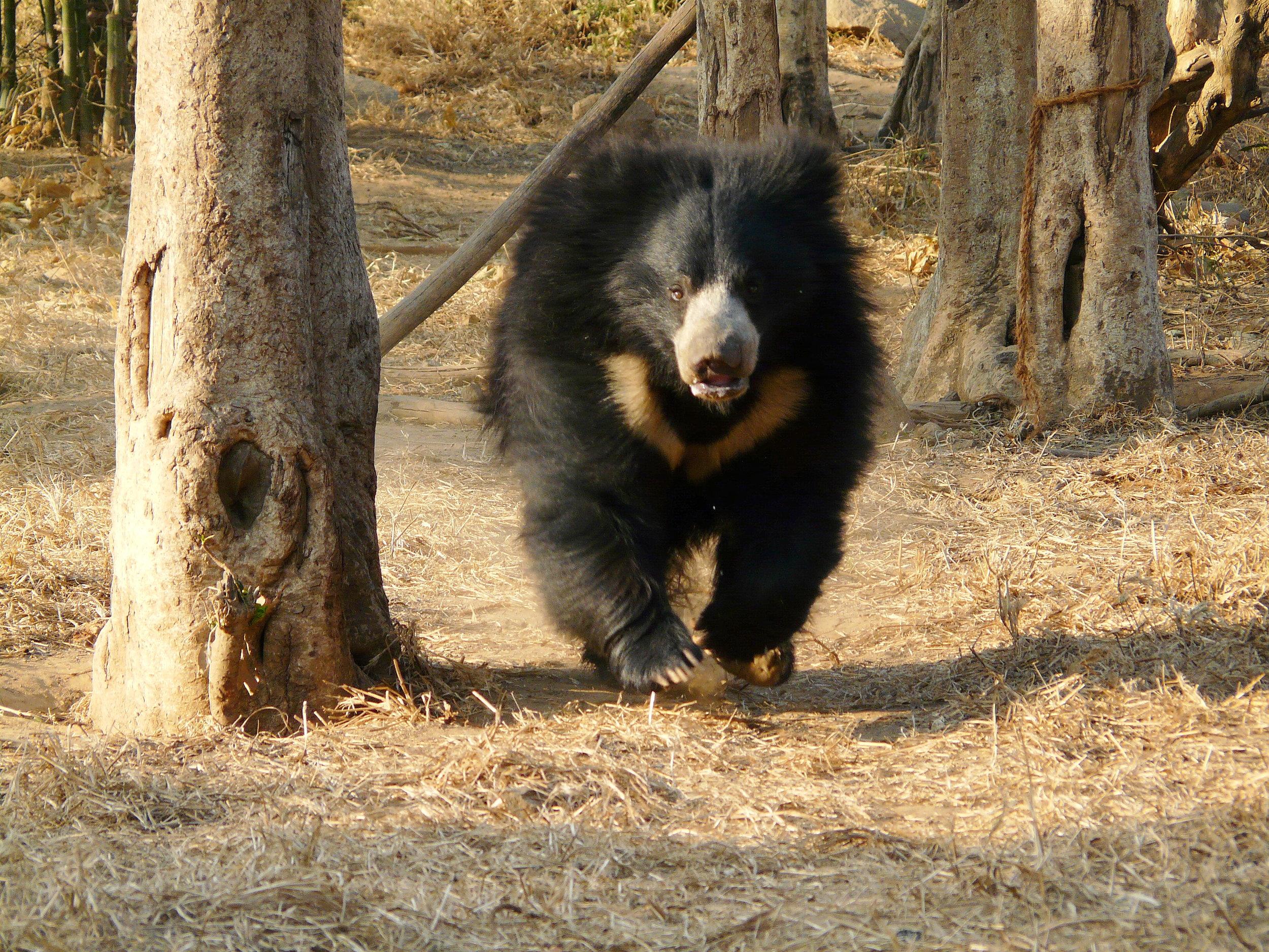 Photo: wildlifesos.org