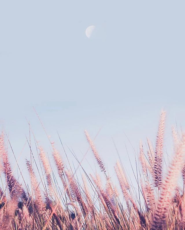 Half moon above . . . 📷: @teresacfreitas . . #underthemoon #moon #beautifullandscape #grasses #wildgrasses #firstquartermoon #portugal #flora #simplebeauty #colorsofnature #protectourplanet #natureconservation #wildlife #travel #slowfashion #designingforgood #wanderlust #wonder #curiosity #adventures #beautyinnature #saveendangeredspecies #storytelling #science #design #art #protectwildplaces #protectbiodiversity #naturelove #PL_ecologies