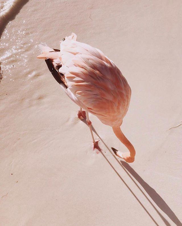 Flamingo Pink . . . . 📷: @ariellevey  #PL_ecologies #inspiredbythewild #colorsofnature #designingforgood #conservation #wildlife #travel #slowfashion #ethicalfashion #wanderlust #wonder #curiosity #travelwithus #adventures #beautyinnature #flamingo #featheredfriends #flamingopink #waterbirds #pinksand #saveendangeredspecies #loveforanimals #travelogue #storytelling #science #design #art #protectwildplaces #protectbiodiversity #naturelove