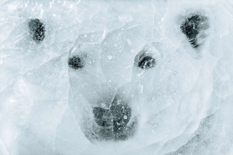 170528_guido_mencari_lucca_polar_bear-7.jpg