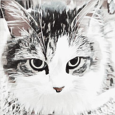 Mijo - The Emo Cat