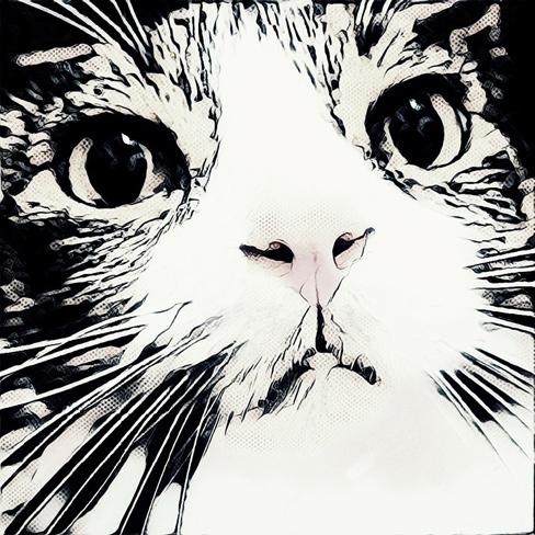 Ollie - The Adventure Cat