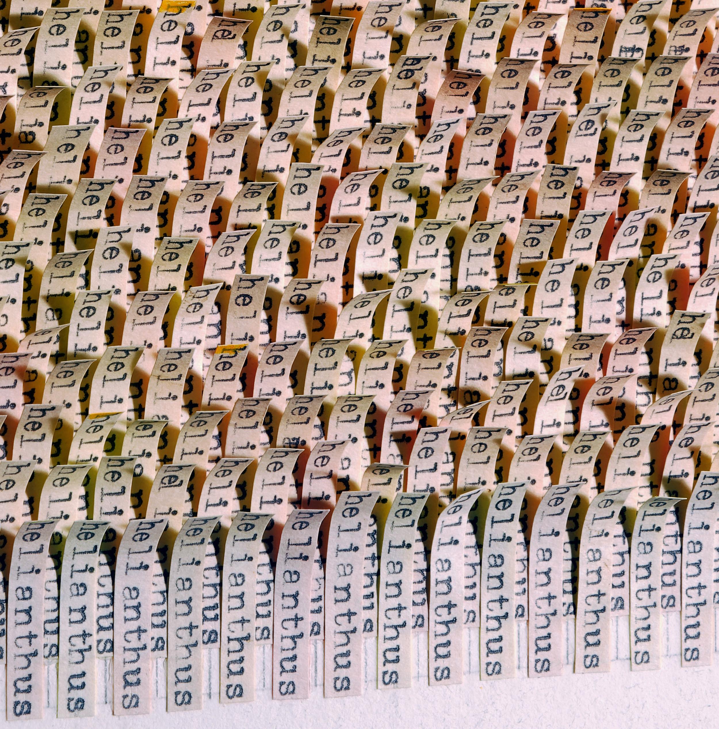 Helianthus (detail 2a).jpg