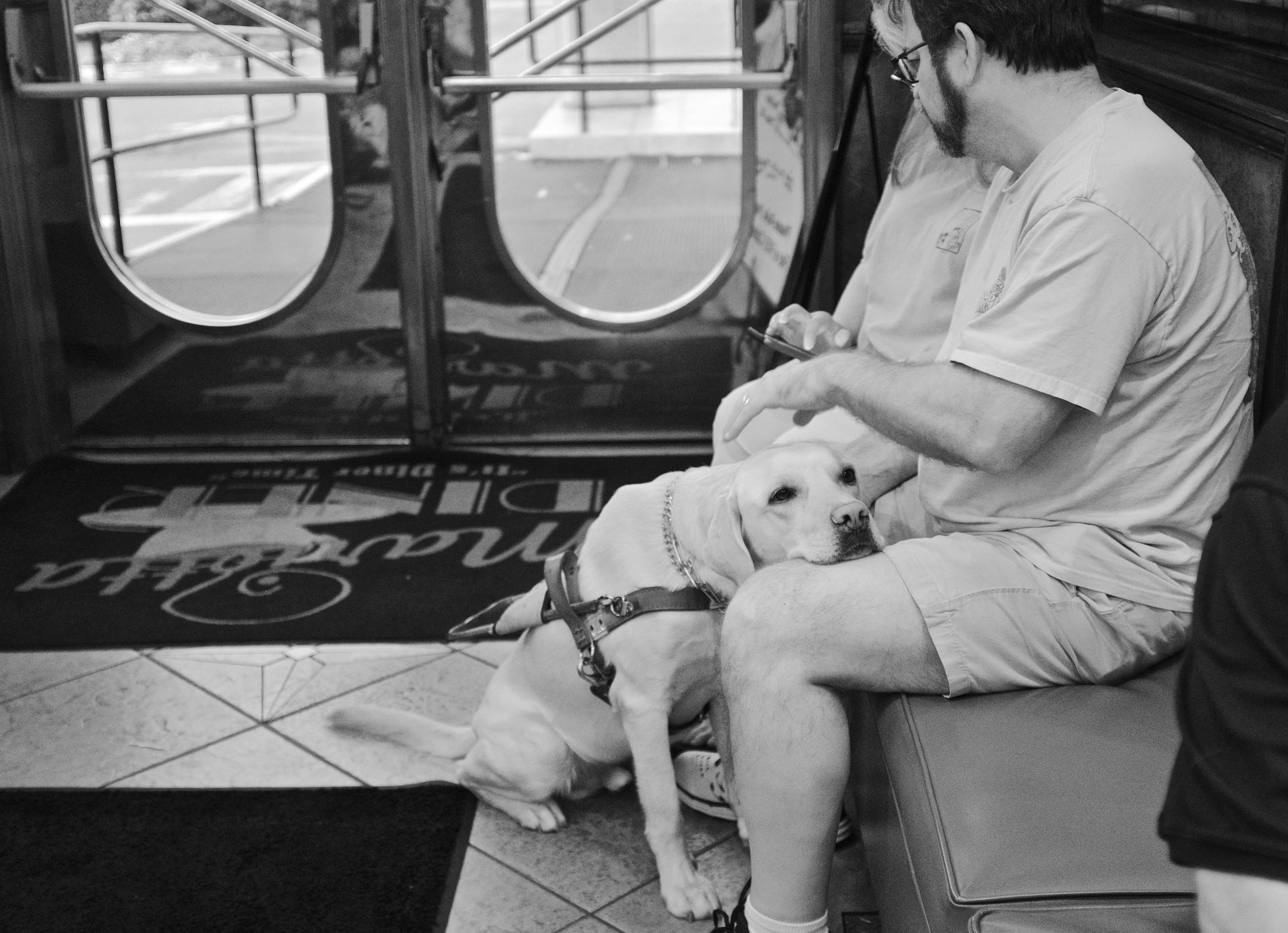 """' Companion Dog' comforts owner "" by  Tom Driggers  is licensed under  CC BY 2.0"