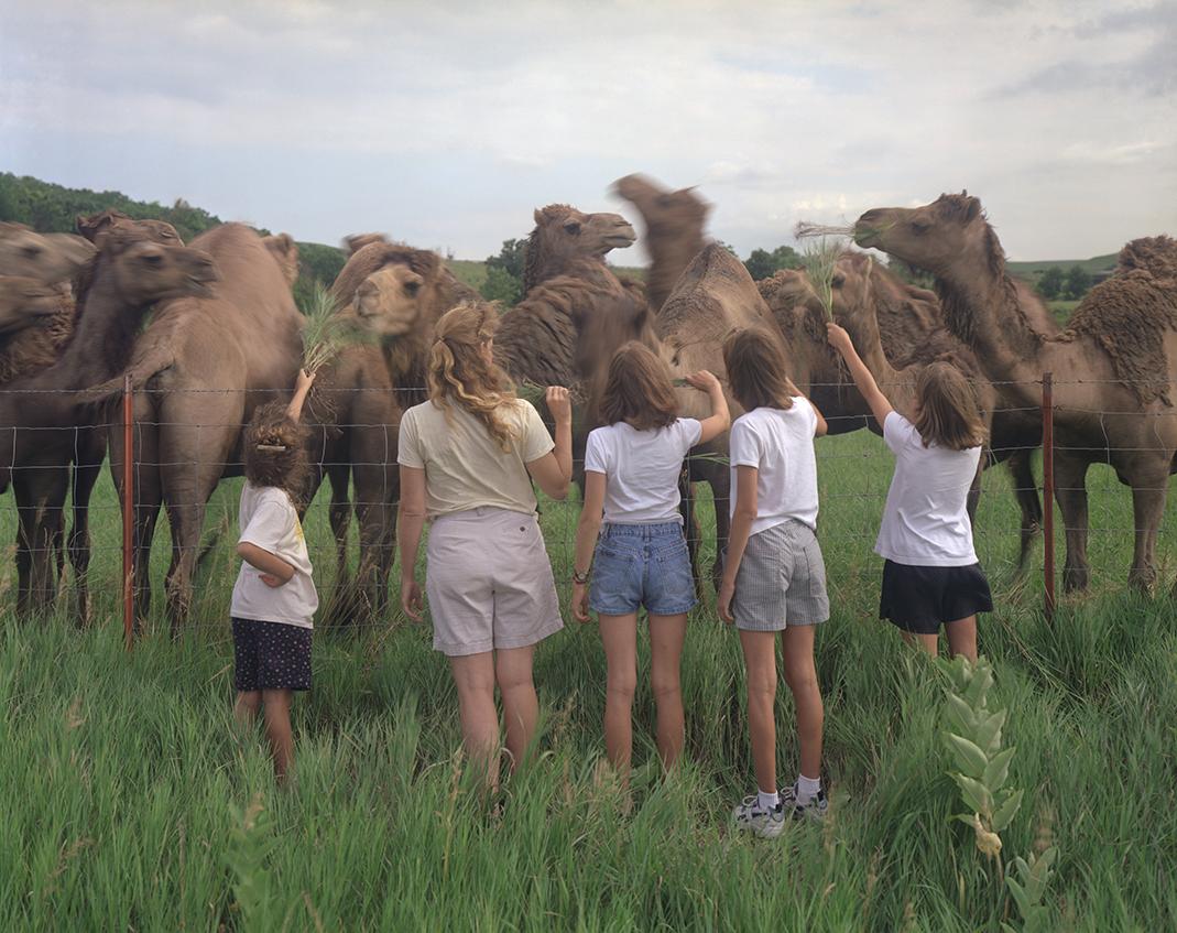 CAMELS IN KANSAS, Flint Hills Kansas