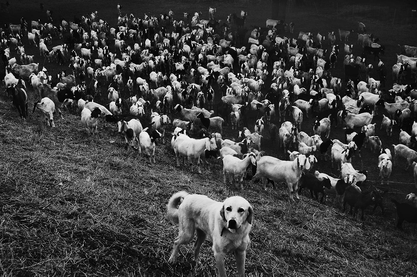 Guard dog delta
