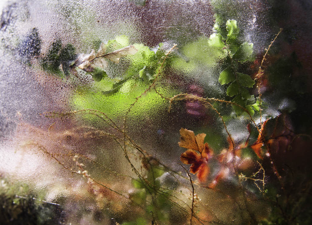 T O O H O T - Primitive Plant Series, ©️ 2013 Stephanie C. Cosby