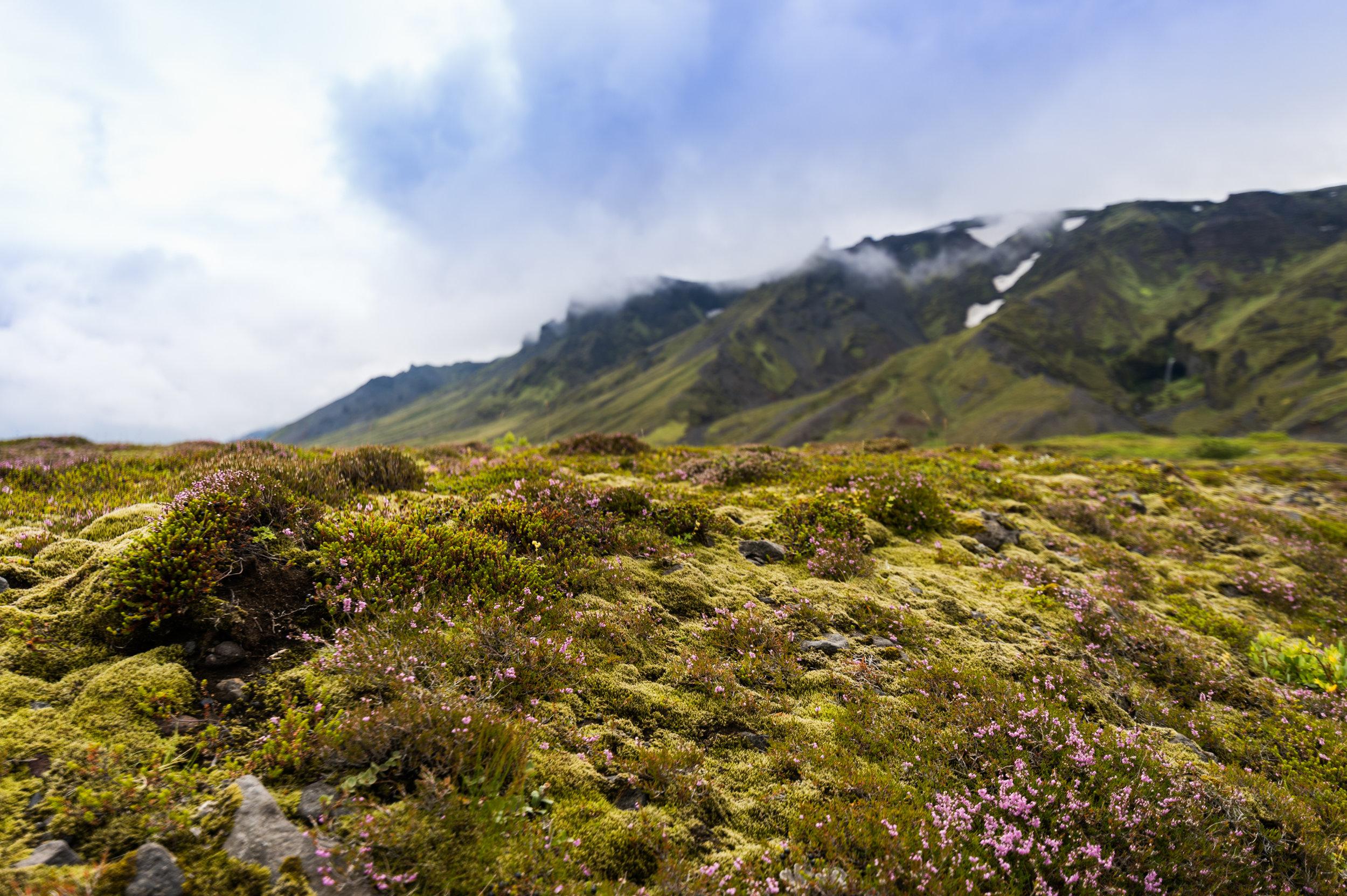 Iceland_2016-006.jpg