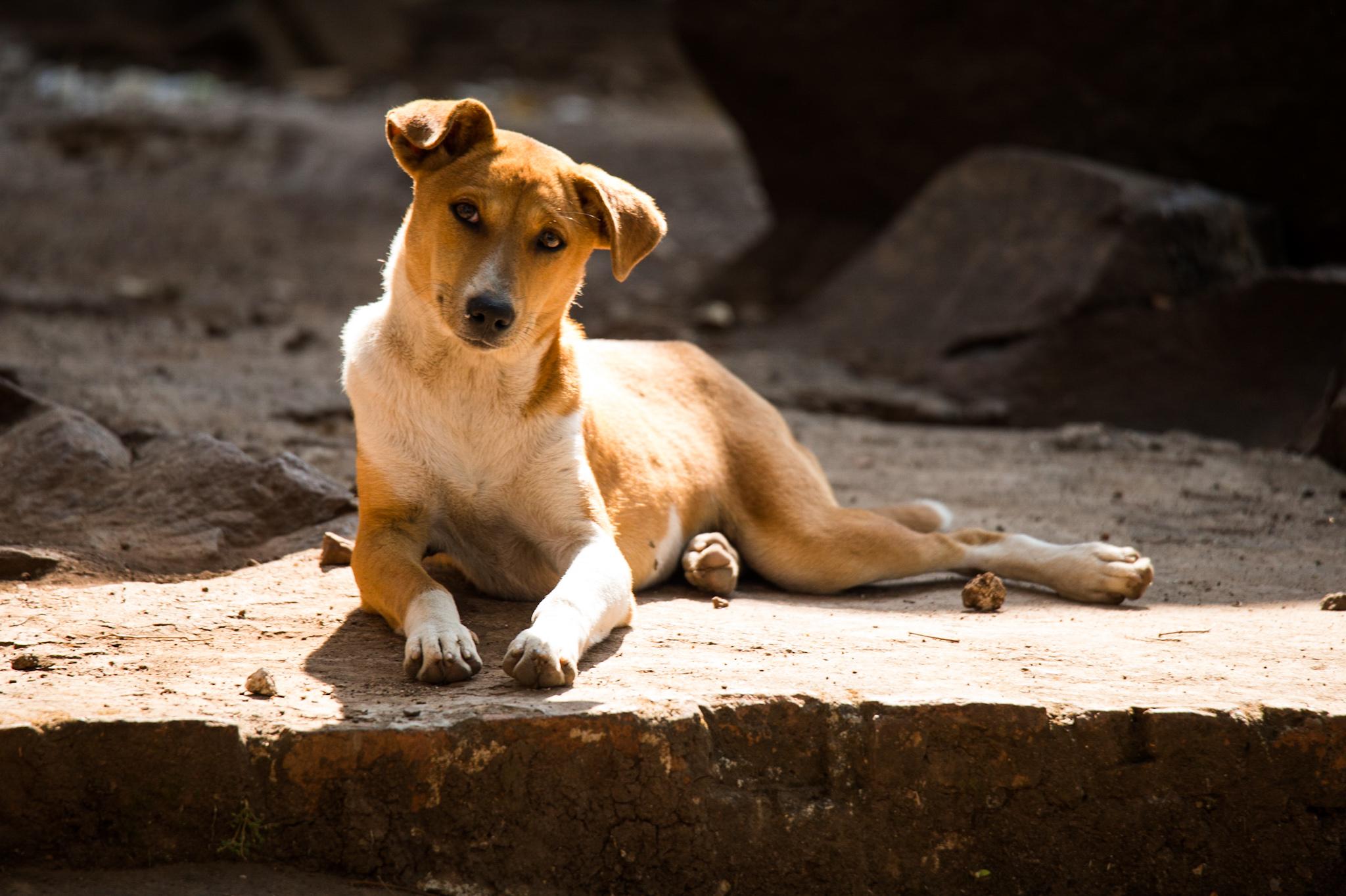 Dog mm