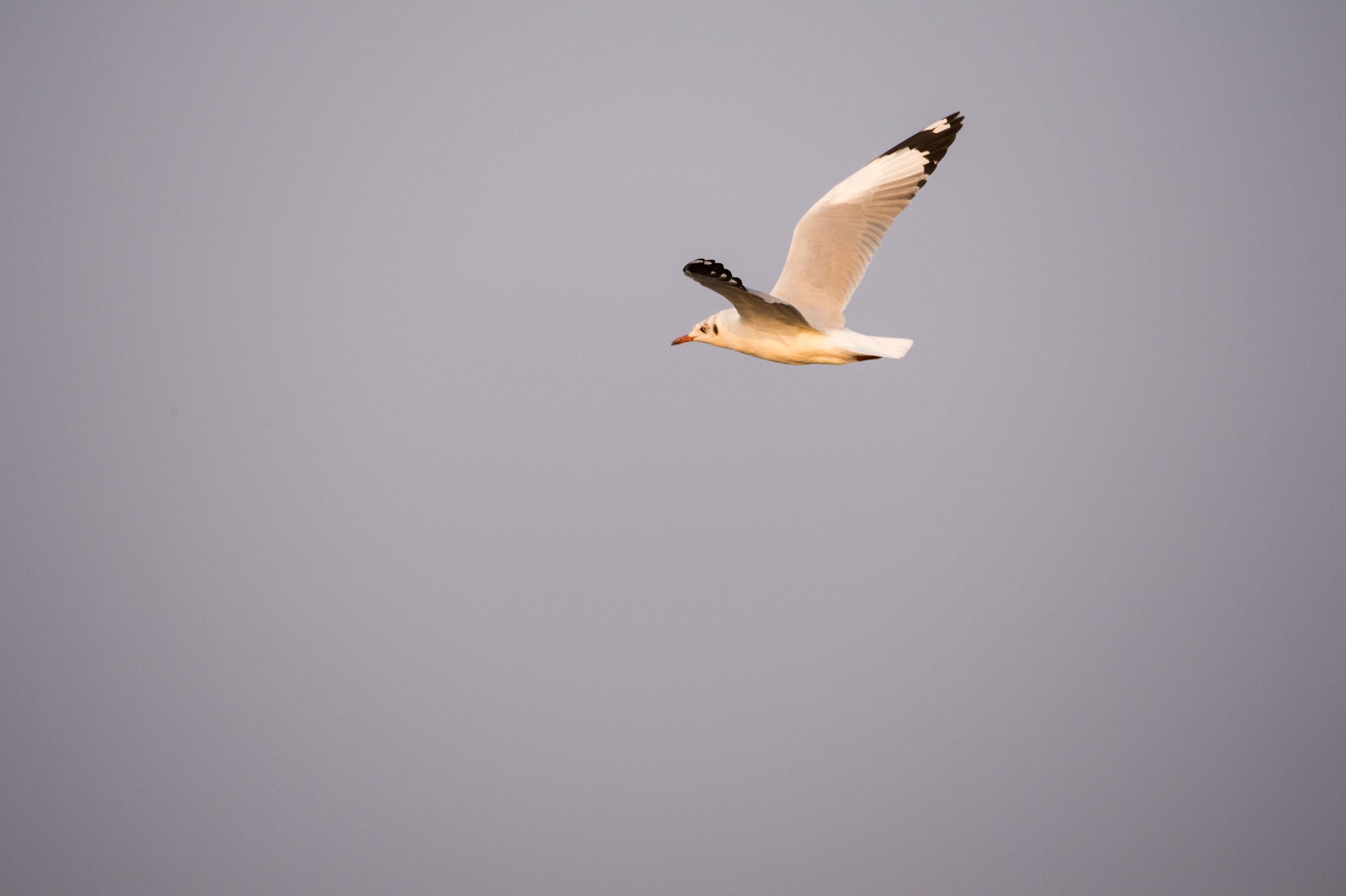 Inle_Lake-00222.jpg