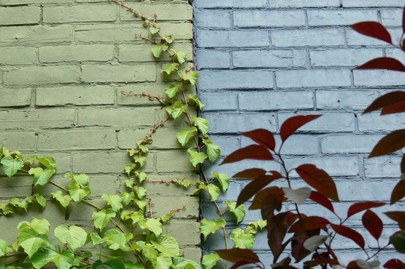 Creeping ivy on painted homes in the Plateau, Montreal via Lora Weaver Mysteries by Katy Leen