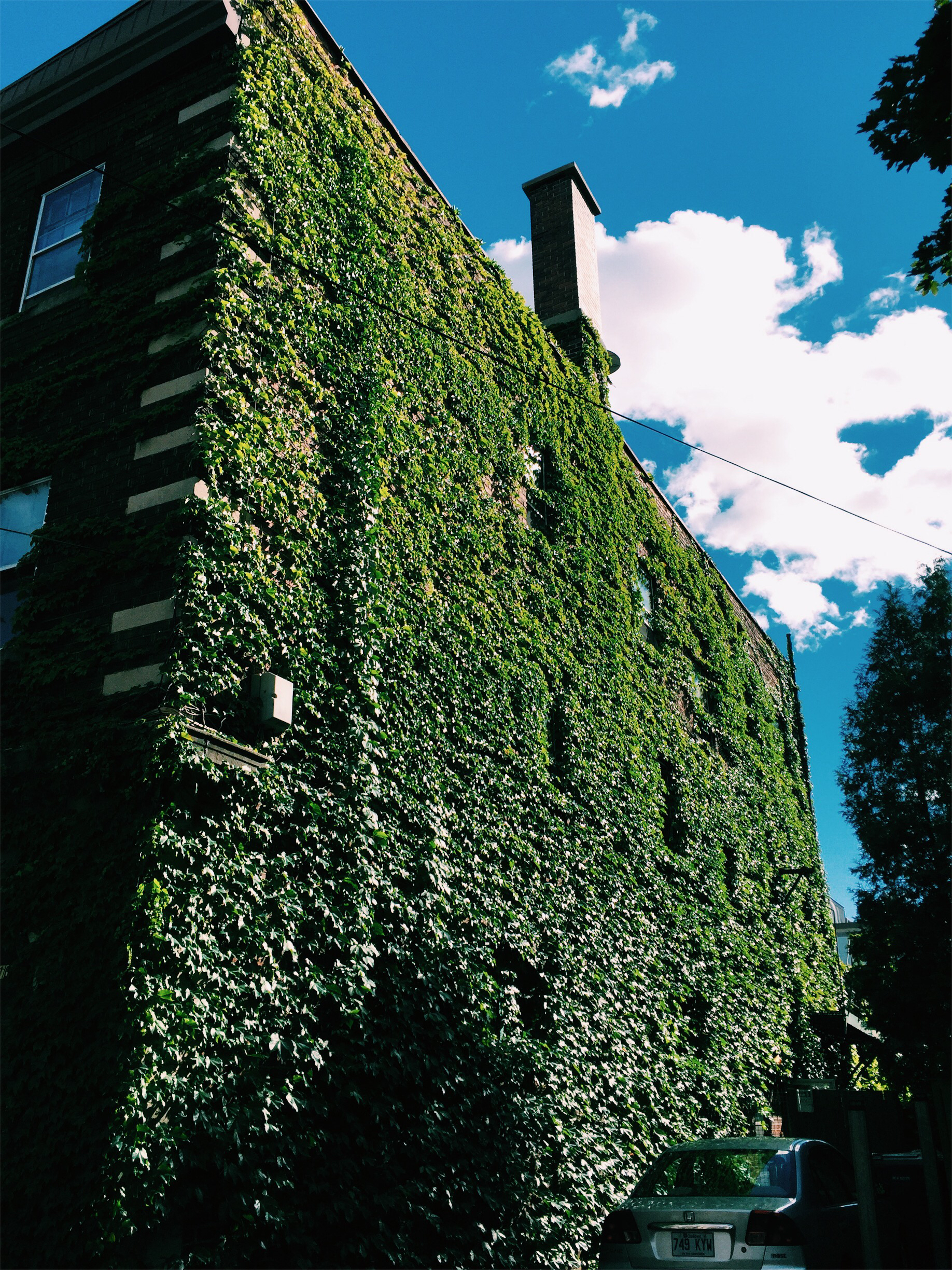 Ivy-laced apartment in Monkland Village via Lora Weaver Mysteries by Katy Leen