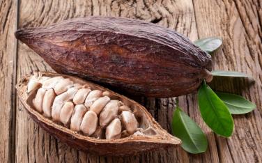 Theobroma Cacao (Cocoa Bean)