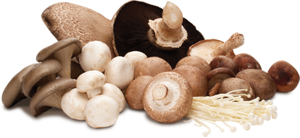 Various types of mushrooms