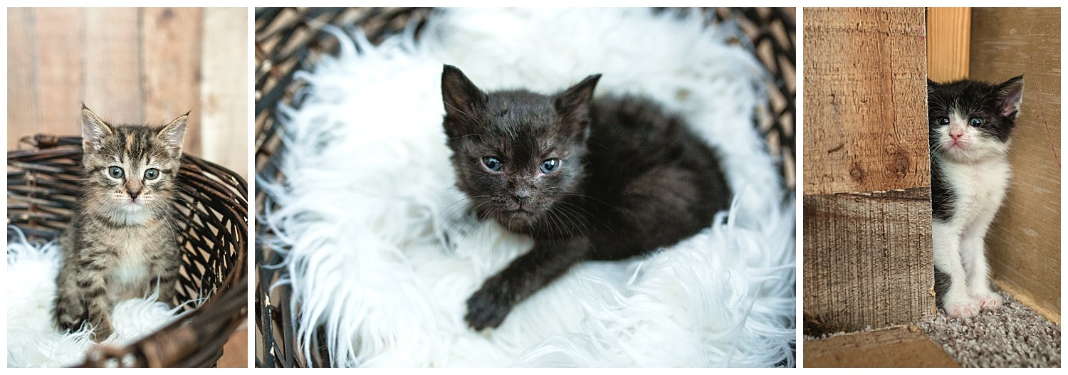"""newborn"" kitten photos of these precious babes!"