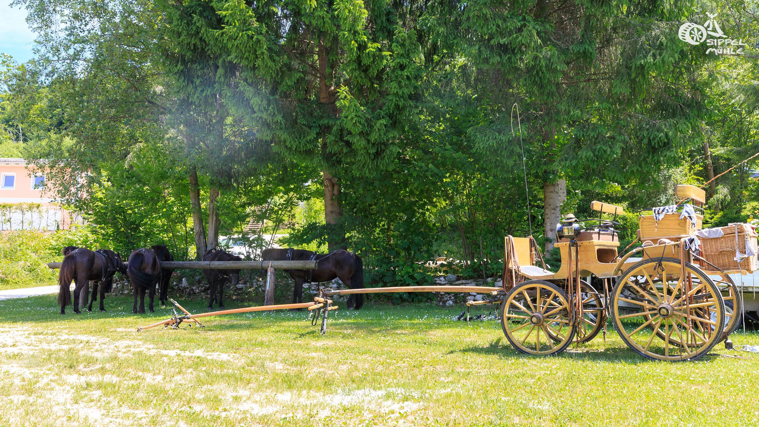 20170611-Campingplatz-0035.jpg