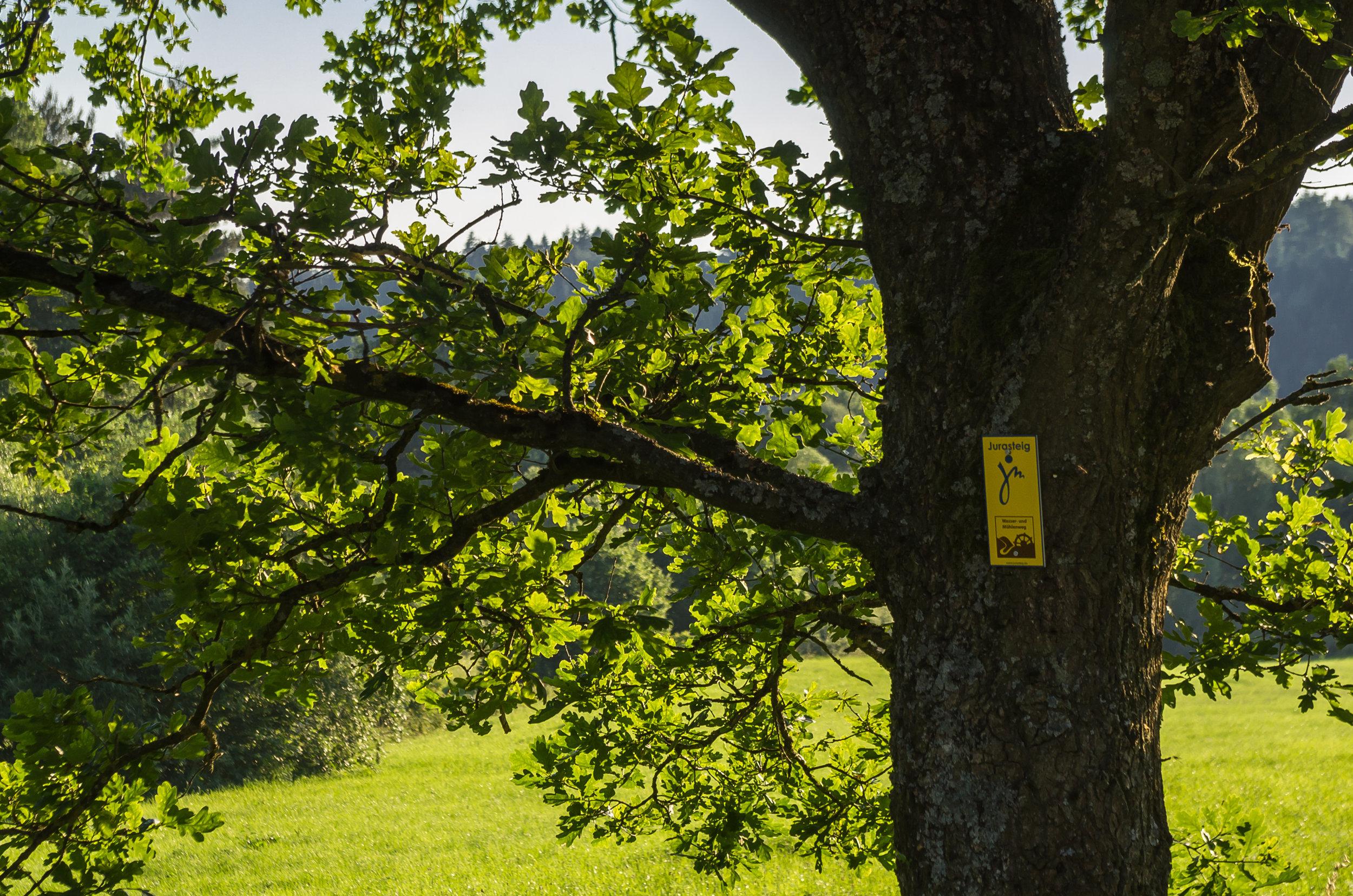 Jura-Steig Wanderweg